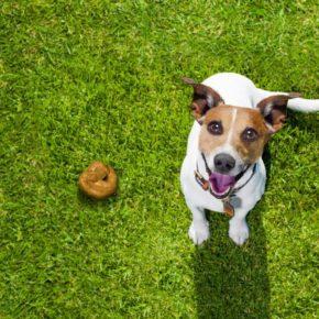 Ciudadanos (Cs) La Garriga propone una partida de 30.000 € en el presupuesto municipal para combatir la presencia de excrementos de perros en la vía pública mediante pruebas de ADN